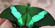 Borboletas e mariposas