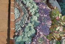 Garden Tips / by Susan Blake-Caldwell