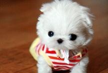 Too Cute / by Sandy James