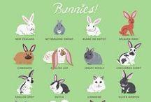 bunny love / cute bunny stuffs
