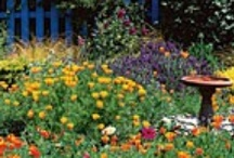 Mary Quite contrary...How does your garden grow?