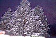 Winter wonders / by Lynne Harrison