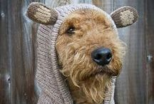 Home: Dogs / I love my Airedale Terrier! Love finding vintage photos of other Dale's in addition to nifty dog things!