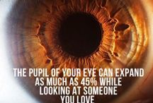 Eyes: facts