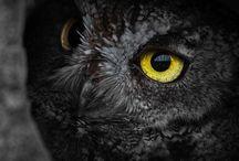 Feathers / Birds of a feather / by Trumpyfinn