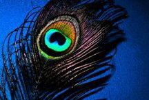Like a Feather / by Rachel