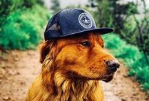 Dogs of Hardwear / Because there's nothing better than exploring the outdoors with your best friend.