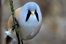 Birds / by Lori Perkins