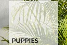 [Puppies]
