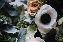 Plants, Succulents & Flowers