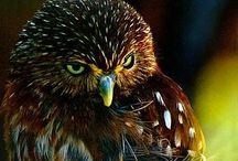 Creatures / Amazing animals / by Michele