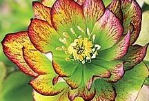 Flowers / by Lynn Wanner