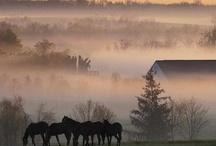 Fog / by Lynn Wanner