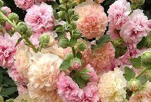 garden: wish list / by Amy Yates