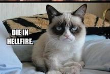 Grumpy Tardar Sauce / by Christie H