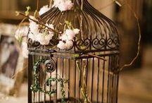 Birdcages / by Miranda Hersey