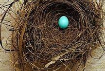 Nests / by Miranda Hersey