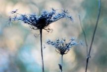 Natural World Photography / by Sally West