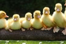 Get your ducks in a row!!!!!!!!!!!!!