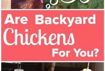 For the Love of Backyard Chickens!