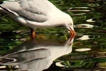 Animal & Bird Photography / by Deena Muzzi