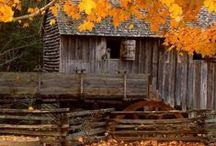 ***Autumn Simplicity*** / My favorite season with all the beautiful colors painted personally by God.. / by Shauna Cupp