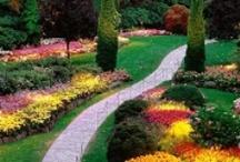 Dream's garden