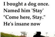 Pets and stuff...