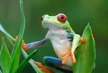 Frogs / by Mayra Elisa Portillo