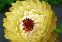 Flowers I love...