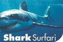 shark and dolphin unit study