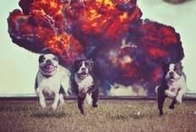 Boston Terrorism / Follow Igor, Eddie, and Chester on Instragram at http://instagram.com/drkatherinec