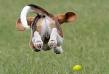 Beagles / by Kathy Oldenburg