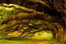 Mooie bomen / by Karin Edens