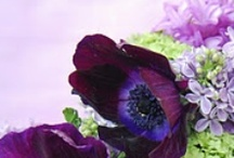 ♥ ❁ ♥ My Purple Passion ♥ ❁ ♥ / What can I say about purple?  It is such a royal color.  I absolutely love everything that is purple.  Purple flowers are beautiful and I could have a garden of just purple flowers!