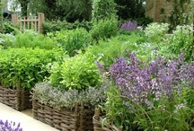 ✿•♥•✿•♥•✿Garden Shed & Landscaping✿•♥•✿•♥•✿ / Landscaping ideas; garden hints & tips; beautiful garden sheds; herbs