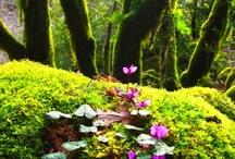 დ╮❤╭დ Nature's Beauty დ╮❤╭დ / Mother Nature