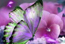 ʚįɞ~ ♥ ~Butterfly Love~ ♥ ~ʚįɞ / I love to watch butterflies fly from flower to flower.  They are such beautiful beings that the Lord made for our pleasure.