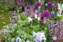❤ஜ♥•✿ English Gardens ❤ஜ♥•✿ / I love beautiful gardens of any kind. English gardens are always beautiful.