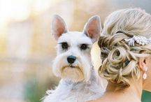 Pets at Weddings / Weddings, animals, pets
