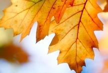 Älska hösten / by kleve .