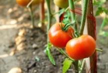 Yard - Gardening