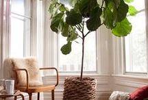Home - Porch/Sunroom / by Rebecca Boese
