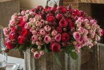 Flores que encantan, consuelan, adornan, alegran, embellecen!!