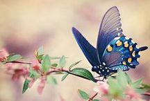 Beautiful Butterflies / Beautiful butterflies fluttering around adding a splash of colour to the planet.
