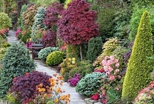 Plants, gardens and terraces