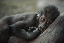 Animals / beautiful animals