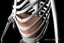 The Human Body:  A - Z