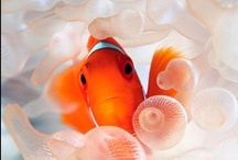 Sea Life / by Chris Wickersham Tryon