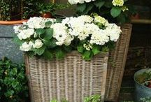 baskets / by Flowers on my Table